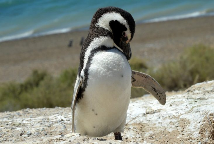 What can you do on Peninsula Valdés in Argentine Patagonia other than look at whales? Check it out here!