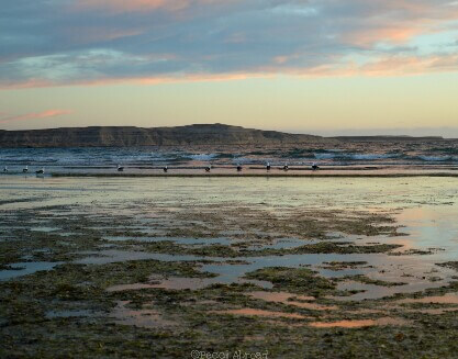 All you need to know before visiting Argentina's Peninsula Valdés - Becci Abroad