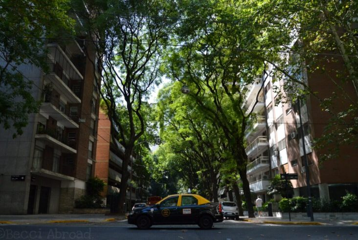 A love letter to the trees of Buenos Aires
