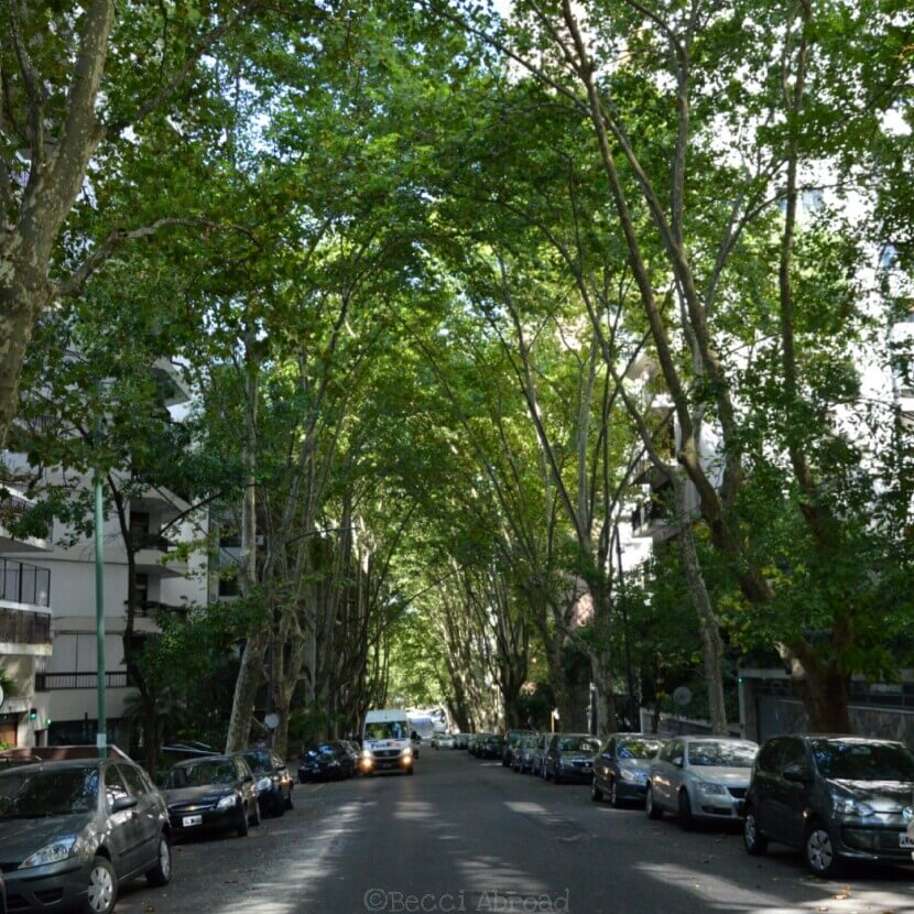 The trees of Buenos Aires is one of the most outstanding things when visiting the Argentine capital – you will love them, I'm sure!