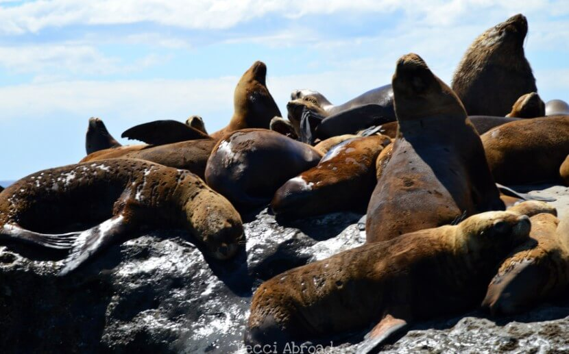 5 ideas to activities to do on Peninsula Valdés (Argentina) outside of the Whale season